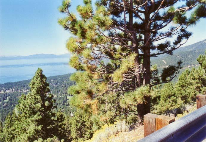 Mount Rose: West Summit Photo - 5