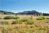 Tahoe Meadows Photo 8a